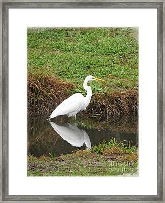 Elegant Egret Framed Print by Ella Kaye Dickey