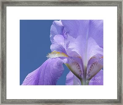 Elegant Iris Framed Print