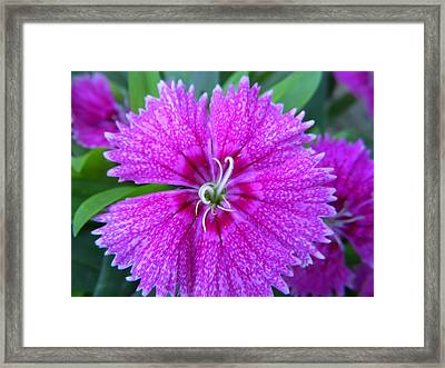 Elegant Lavender Flower Framed Print by Aimee L Maher Photography and Art Visit ALMGallerydotcom