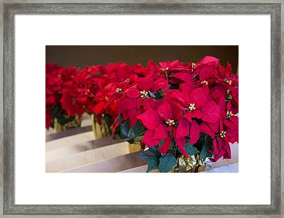 Framed Print featuring the photograph Elegant Poinsettias by Patricia Babbitt