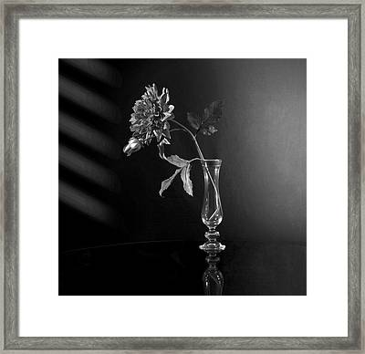 Elegant Respect  Framed Print by Mark Ashkenazi