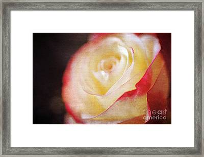 Elegant Rose Framed Print by Darren Fisher