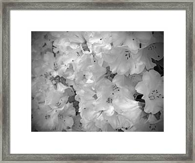 Elegant Soft White Flowers Framed Print by Tina Wentworth