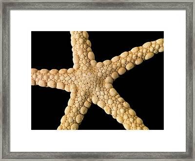 Elegant Starfish Framed Print by Natural History Museum, London