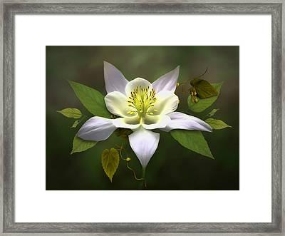 Elegant White Columbine Framed Print