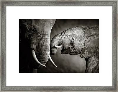 Elephant Affection Framed Print by Johan Swanepoel
