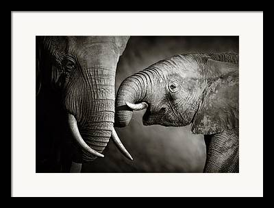 Passionate Touch Framed Prints