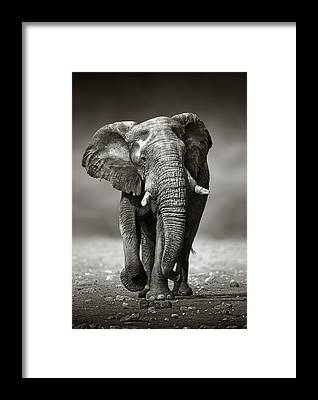 Males Framed Prints