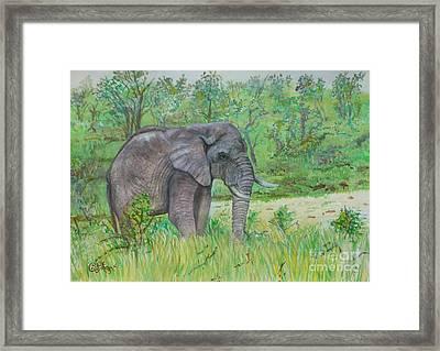 Elephant At Kruger Framed Print by Caroline Street