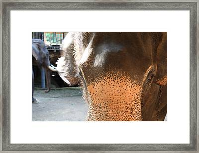Elephant At Maesa Elephant Camp - Chiang Mai Thailand - 01131 Framed Print by DC Photographer