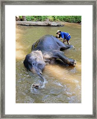 Elephant Bath Framed Print