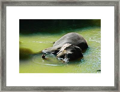 Elephant Bath Framed Print by Sanjeewa Marasinghe