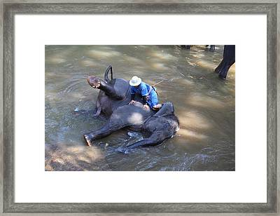 Elephant Baths - Maesa Elephant Camp - Chiang Mai Thailand - 011311 Framed Print by DC Photographer