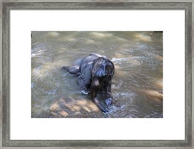 Elephant Baths - Maesa Elephant Camp - Chiang Mai Thailand - 011312 Framed Print