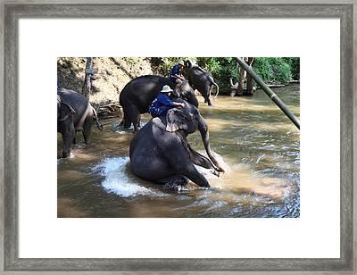 Elephant Baths - Maesa Elephant Camp - Chiang Mai Thailand - 011314 Framed Print