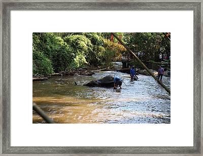 Elephant Baths - Maesa Elephant Camp - Chiang Mai Thailand - 011320 Framed Print by DC Photographer
