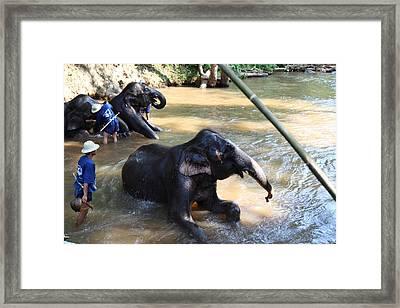 Elephant Baths - Maesa Elephant Camp - Chiang Mai Thailand - 011326 Framed Print by DC Photographer