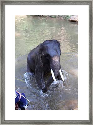 Elephant Baths - Maesa Elephant Camp - Chiang Mai Thailand - 011327 Framed Print