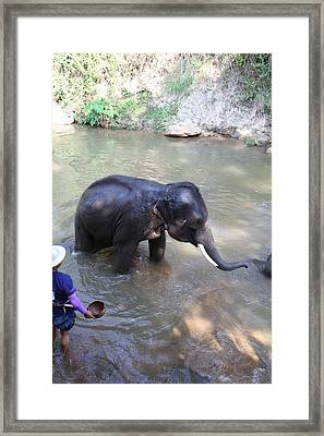 Elephant Baths - Maesa Elephant Camp - Chiang Mai Thailand - 011328 Framed Print