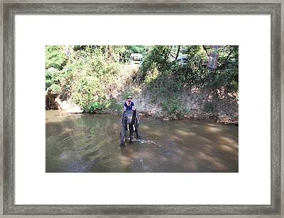Elephant Baths - Maesa Elephant Camp - Chiang Mai Thailand - 01136 Framed Print
