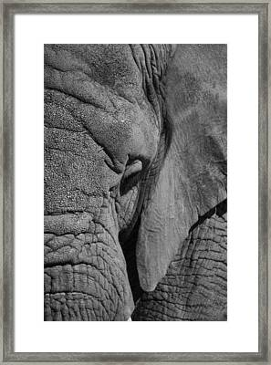 Elephant Bw Framed Print