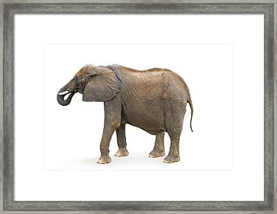 Framed Print featuring the photograph Elephant by Charles Beeler