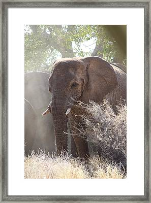 Elephant Framed Print by David Van der Merwe