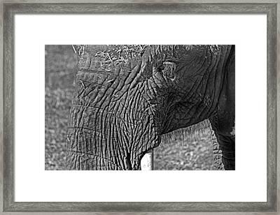 Elephant.. Dont Cry Framed Print