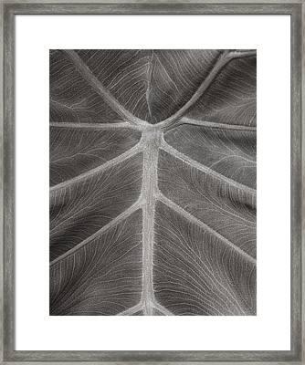 Elephant Ear Study 2 Framed Print by Marilyn Hunt