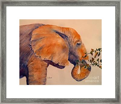 Elephant Eating Framed Print