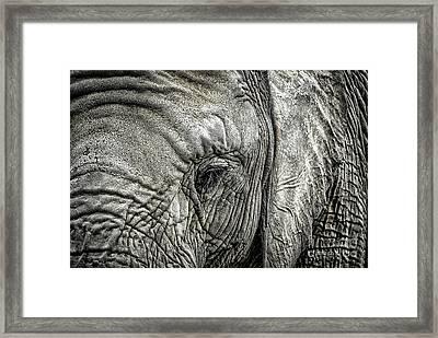Elephant Framed Print by Elena Elisseeva
