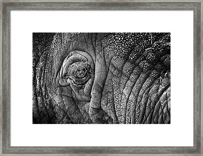 Elephant Eye Framed Print by Sebastian Musial