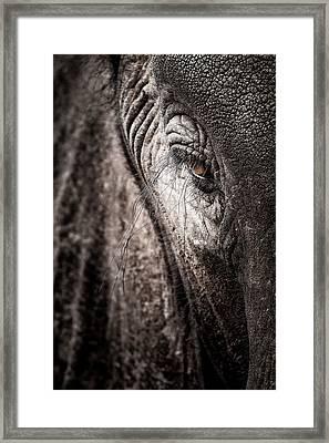 Elephant Eye Verical Framed Print by Mike Gaudaur