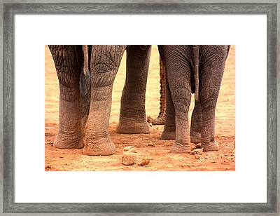 Framed Print featuring the photograph Elephant Family by Amanda Stadther