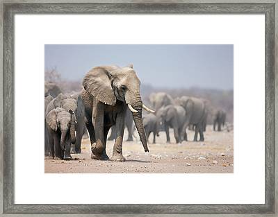 Elephant Feet Framed Print by Johan Swanepoel