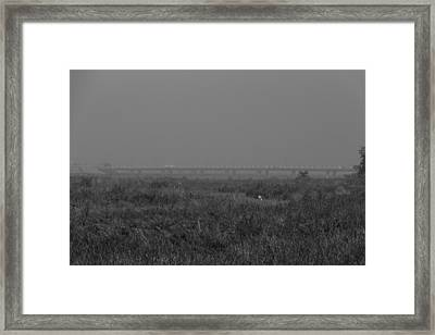 Elephant Grass And View Of Bridge Framed Print