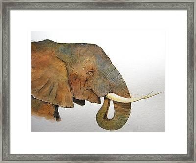 Elephant Head Study Framed Print by Juan  Bosco
