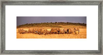 Elephant Herd On A Plain, Kenya, Maasai Framed Print by Panoramic Images