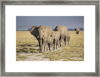 Elephant Herd  Framed Print by Richard Garvey-Williams