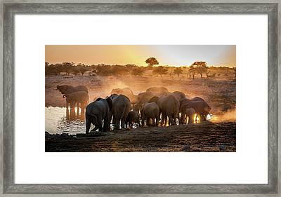 Elephant Huddle Framed Print