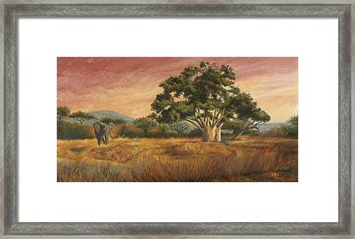 Elephant In The Wild Framed Print