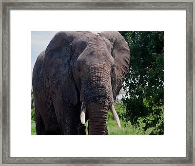 Elephant Framed Print by Jim Heath