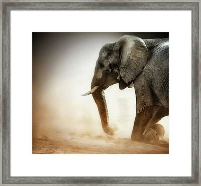 Elephant Kneeling With Dust Framed Print