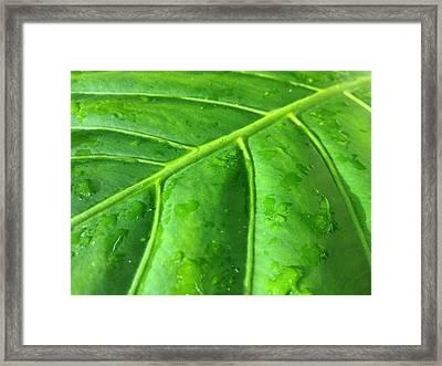 Elephant Leaf 2 Framed Print