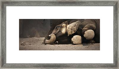 Elephant - Lying Down Framed Print by Johan Swanepoel
