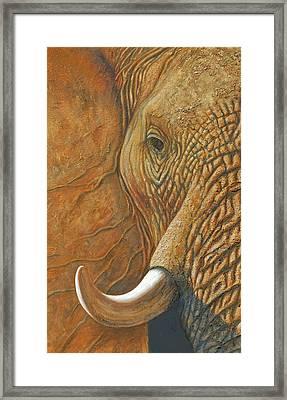 Elephant Matriarch Portrait Close Up Framed Print