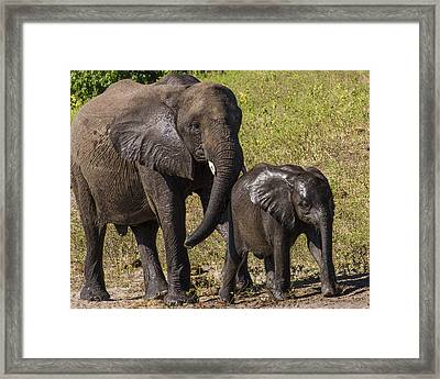 Elephant Mom And Baby Framed Print