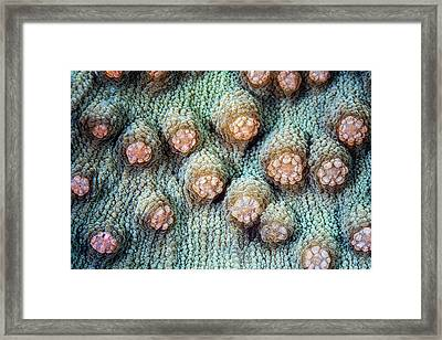 Elephant Nose Coral Framed Print
