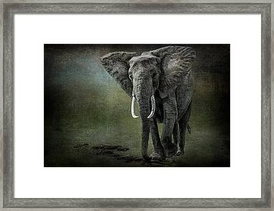 Elephant On The Rocks Framed Print by Mike Gaudaur
