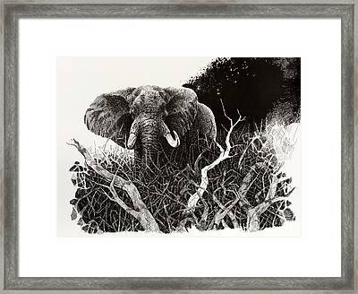 Elephant Framed Print by Paul Illian